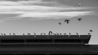 coney island birds